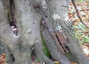 gun-tree